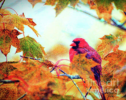 Cardinal in Autumn by Kerri Farley
