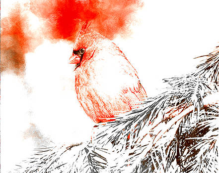 Cardinal in Snow by Femina Photo Art By Maggie
