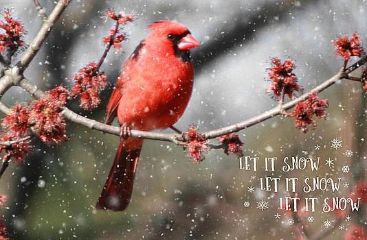 Cardinal in Snow by Linda C Johnson