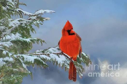 Cardinal in Winter II by Janette Boyd