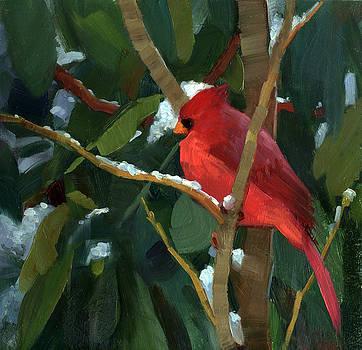 Cardinal in Winter by Kathleen Weber