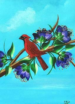 Cardinal by Iris  Mora