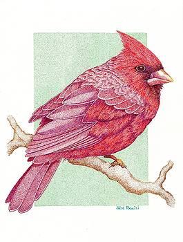 Cardinal by Jack Puglisi