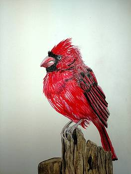 Cardinal by Joan Mansson