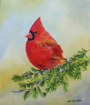 Cardinal by Ken Ahlering