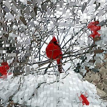 Cardinal by Lisa Kane