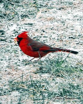 Cardinal by Lorraine Louwerse