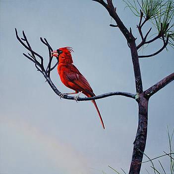 Cardinal by Manuel Lopez