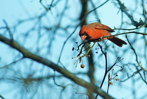 Mike Shaw - Cardinal