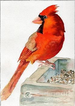 Cardinal on Birdfeeder by Andrea Rubinstein