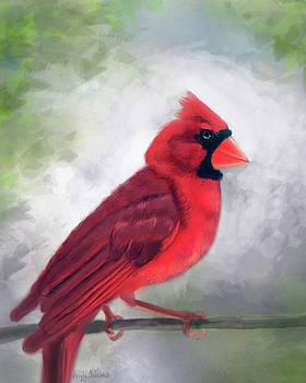 Angela Murdock - Cardinal on Branch