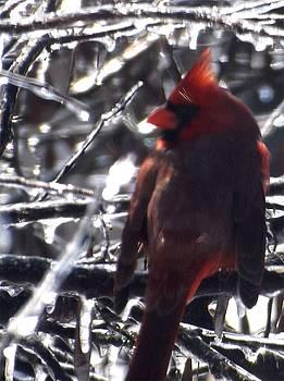 Colette Merrill - Cardinal on ice