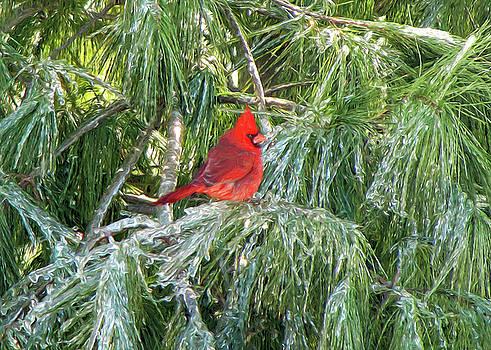 Cardinal on Ice by John Freidenberg