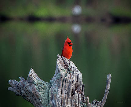 Cardinal - Paint FX by Brian Wallace