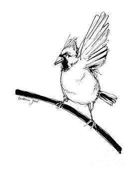 Cardinal pen drawing by Cristina Jaco
