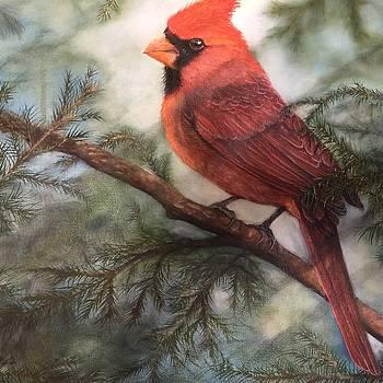 Cardinal by Virginia Butler