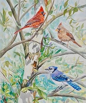 Cardinals and Blue Jay in Birch Tree by Gail Dolphin