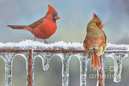 Cardinals and Icicles by Janette Boyd