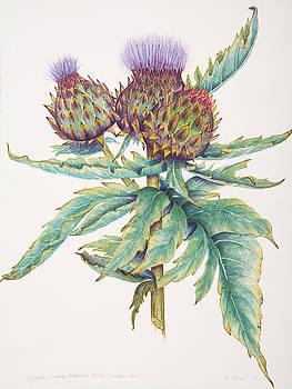 Cardoon Artichoke Thistle. by Elizabeth H Tudor