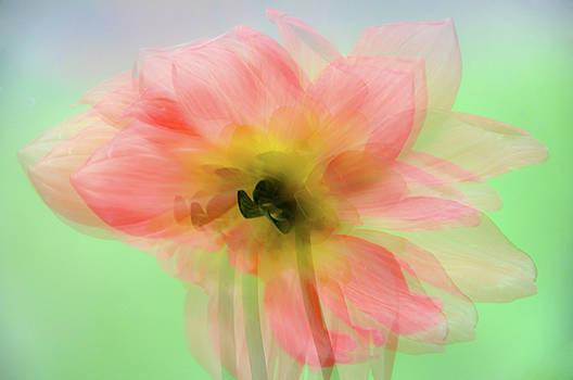 Jenny Rainbow - Carefree Summer