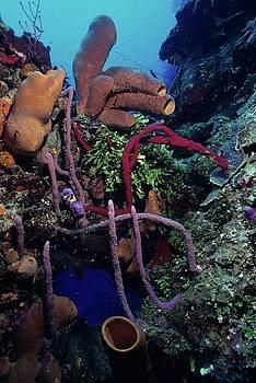Don Kreuter - Caribbean Kaleidoscope