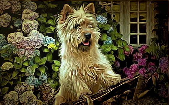 Carin Terrier   by Janice MacLellan