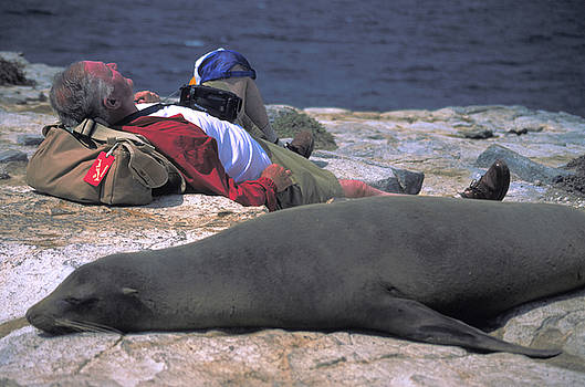 Carl Purcell Naps with a Seal by Unknown