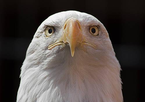 Carlisle Eagle by James Guilford