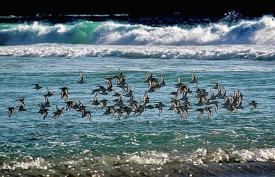 Carmel Beach Flock 2 of 3 in Series by Jeri Sawall