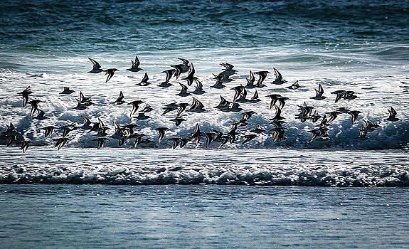 Carmel Beach Flock 1 of 3 in Series by Jeri Sawall