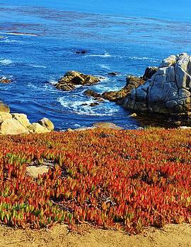Carmel California by Julie Lourenco