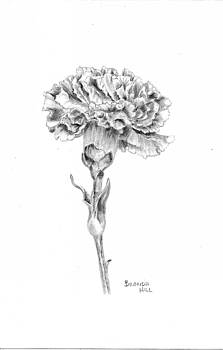 Carnation by Brenda Hill