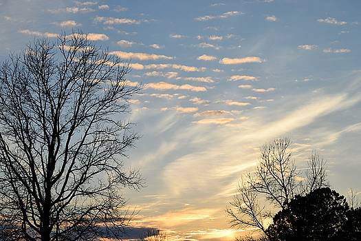 Carolina Blue Sky by Renee Olson