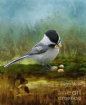 Carolina Chickadee Feeding by Judy Filarecki