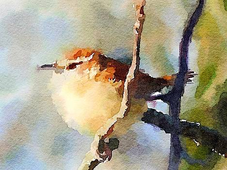 Carolina Wren 2 by Kenna Westerman