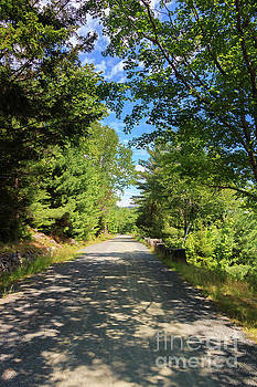 Carriage Road of Acadia National Park by Elizabeth Dow