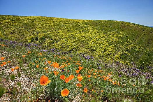 Carrizo Plains 5 by Daniel Knighton