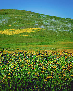 Carrizo Plains Superbloom by Christopher Petro