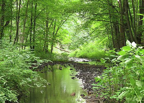 Carver Creek by Kimberly Mackowski