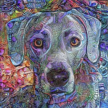 Peggy Collins - Cash the Blue Lacy Dog Closeup