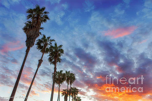 Casitas Palms by John A Rodriguez