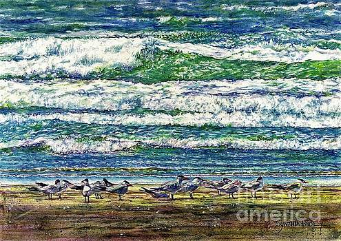 Caspian Terns by the Ocean by Cynthia Pride