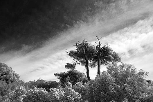Castelfusano's pinewood by Luigi Inzeo