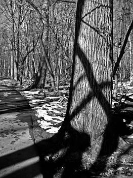 Casting Shadows by Sheryl Burns