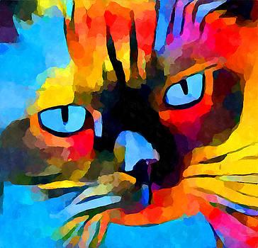 Cat 5 by Chris Butler