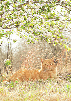 Cat and Apple Blossoms by Sari ONeal