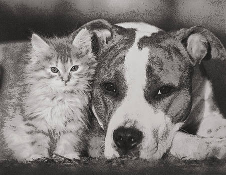 Cat and Doggy Love by Mario Carini