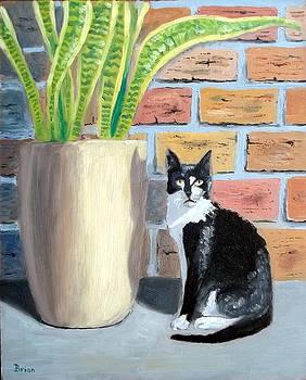 Cat and Sansevieria by Brian Van der Spuy