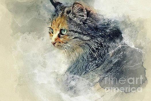 Dimitar Hristov - CAT Aquarelle