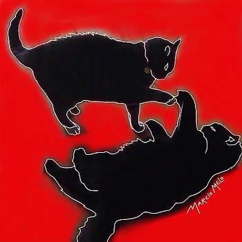 Cat Attack  by Marcio Melo